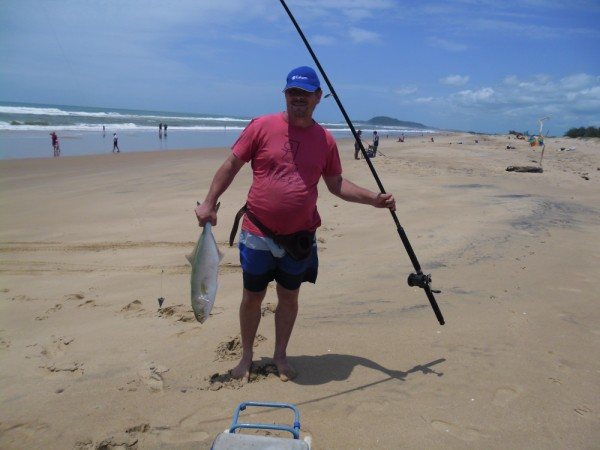 4kg Blue fish (shad in South Africa(
