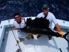 Billy's Sailfish