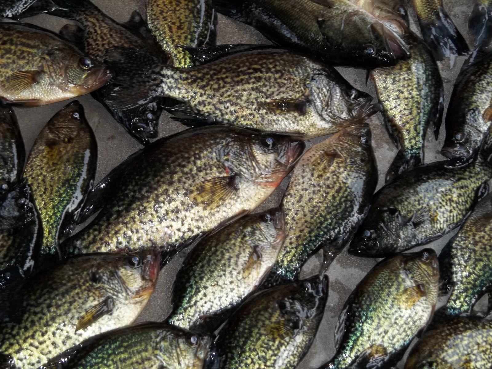 Louisiana Bass/Crappie February 12'