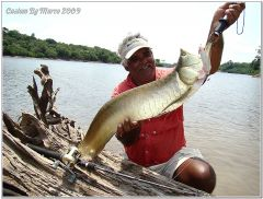 Fish Aruanã Rio Juma Amazon