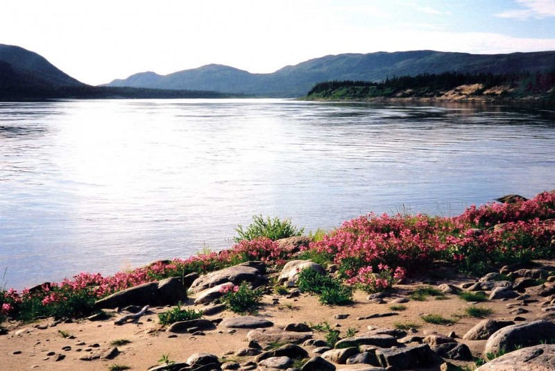 Wilderness River Scenes : Salmon  River and Arctic Flowers