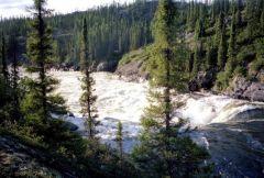 Wilderness River Scenes : Brook Trout River