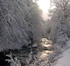 Trout Stream, Winter Sun and Snow